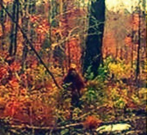 Bigfoot in Maine.