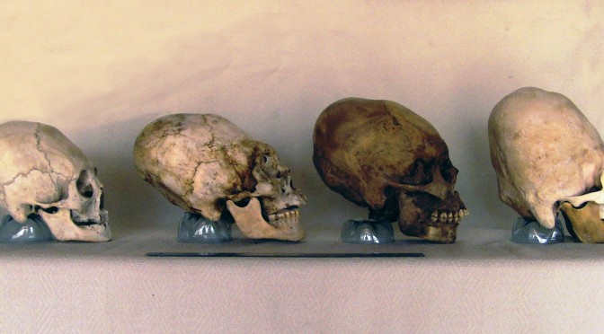 Paracas skulls are not human | DNA test results show
