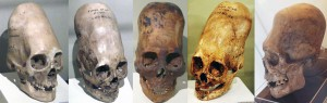 DNA from the Paracas skulls is shown to be something other than human.